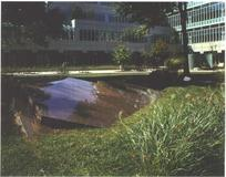 Courtyard Lawn